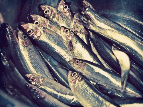 鮮魚部門のアルバイトの仕事内容