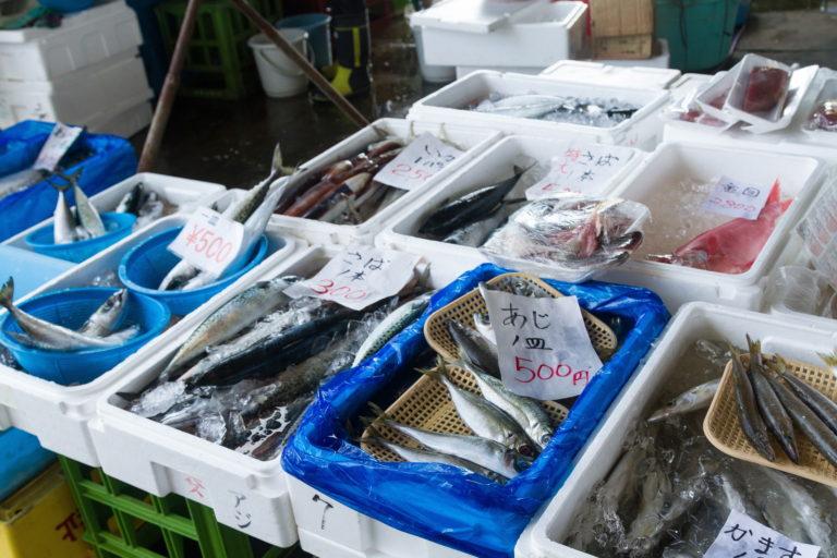 【現役店長が解説】鮮魚アルバイトはきつい?臭い?内容を詳しく解説します!